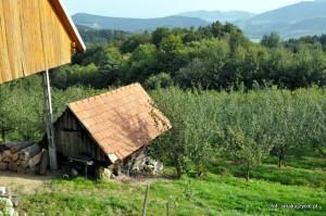 śliwkowe suszarnie w Małopolsce, mają wieloletnią tradycję